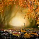 Fall by Igor Zenin