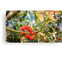 Brilliant Holly And Berries  Canvas Print