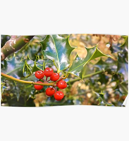 Brilliant Holly And Berries  Poster