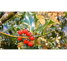 Brilliant Holly And Berries  Photographic Print