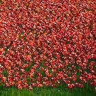 Ceramic poppies by Braedene