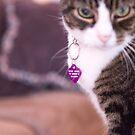 Cat 6 by Rebecca Cozart