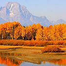 Autumn has come to Wyoming by aussiedi