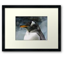 Sleepy Snowy Penguin Framed Print