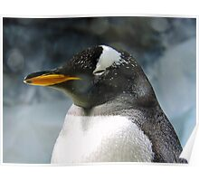 Sleepy Snowy Penguin Poster