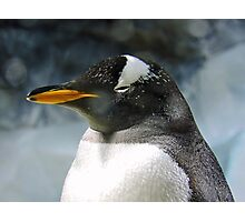 Sleepy Snowy Penguin Photographic Print