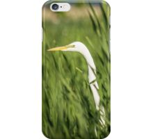 Great Egret In The Cattails iPhone Case/Skin
