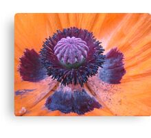 Within a Poppy Canvas Print