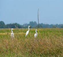 Three Herons & A Red Wasp by WildestArt