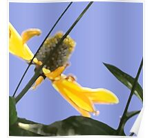 1018 yellow flowers 2 square blue sky Poster