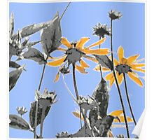 1021 yellow flowers 5 square blue sky Poster