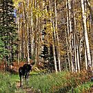 To Hike With A Moose Throw Pillow & Tote Bag by Gene Praag