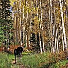 To Hike With A Moose Phone Case by Gene Praag