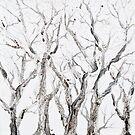 Bare Branches by Regina Valluzzi