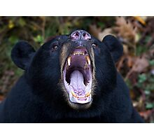 """I am not Yogi!!!"" - Black Bear Photographic Print"