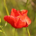 Summer Silk - Lest We Forget... by Alison Finch