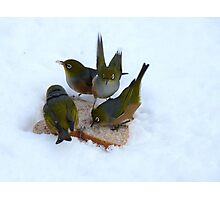 Junior...I Said... You Will EAT Your Crusts!!.....Silver-Eyes - NZ Photographic Print