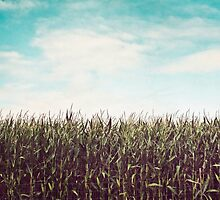 Cornfield by LawsonImages