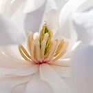 Spring Beauty  by Nicole  Markmann Nelson