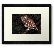Eastern Screech Owl / Red Morph Framed Print