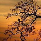 Sunset Hawk by Laura Puglia