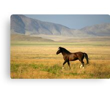 The Proud One Canvas Print