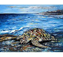 See Turtle Photographic Print