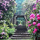 Rhododendrons At Wentworth Castle by wallarooimages
