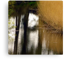 Reed Reflections Canvas Print