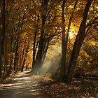 Golden Trail by Robin-Lee
