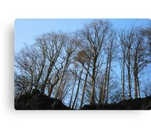 The Trees on Top Canvas Print