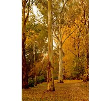 Bright in Autumn Photographic Print