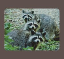 Three Raccoon Kids Clothes