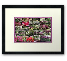 Azalea Magic Framed Print