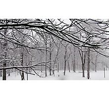 Snow in New York City  Photographic Print