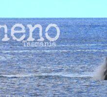 Whale Hichway Bicheno Tasmania Sticker