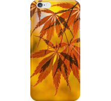 Maple in the gold fall iPhone Case/Skin