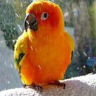 Do You Need A Little Sunshine In Your Life?... - Sun Conure - NZ by AndreaEL