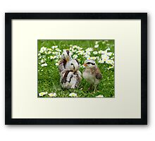 We'll Say It With Daisies - Chicks NZ Framed Print