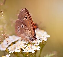 Ringlet brown butterfly  by Arletta Cwalina