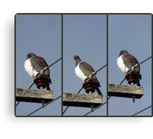 Yikes - Hawk Approaching! - New Zealand Canvas Print