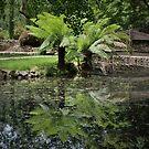 Fern garden. by Jeanette Varcoe.
