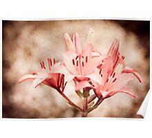 Flowering Lilium plant sepia toned image  Poster