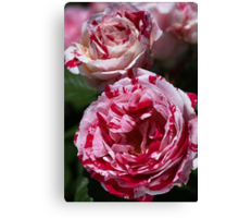 Double Toned Rose Canvas Print