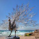 Peacock does Bondi by Chris Allen