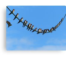Bird On A Wire - Welcome Swallows NZ Canvas Print
