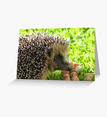 Thank You... You Saved My Life... - Hedgehog - NZ Greeting Card