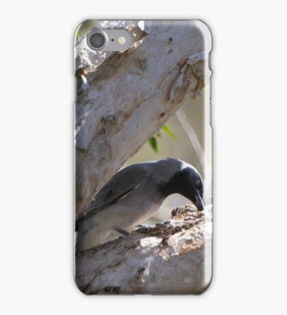 Feeding The Chicks iPhone Case/Skin