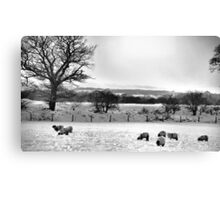 Sheep in the snow Canvas Print