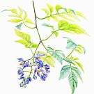 Potato Creeper Solanaceae purple flower botanical art  by Sarah Trett
